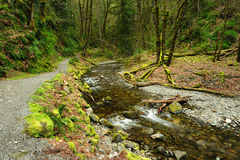 Creek in rain forest Royalty Free Stock Images