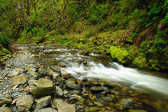 Creek in rain forest Royalty Free Stock Photography