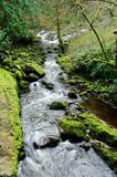 Creek in rain forest Royalty Free Stock Photo