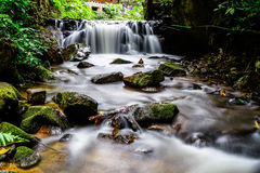 Creek in the Rain forest Stock Image