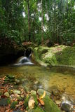 Creek in rainforest Royalty Free Stock Photography