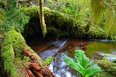 Creek in rainforest Stock Images