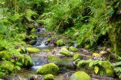 Creek in rainforest stock image