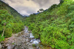 Creek in rainforest Stock Photos