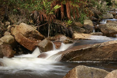 Creek in the rainforest Royalty Free Stock Photography
