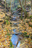 Creek in a ravine Royalty Free Stock Photo