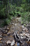 Creek with reeds and rocks in the forest. Stock Images