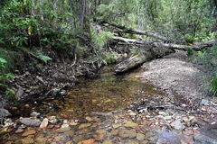 Creek with reeds and rocks in the forest. Royalty Free Stock Images