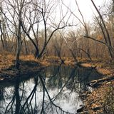 Creek Reflection Stock Photography