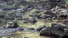 Creek with rocks stock footage