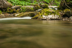 Creek, rocks and vegetation Royalty Free Stock Image