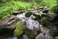 Creek with rocks. Creek with wet rocks and some green plants Royalty Free Stock Photography
