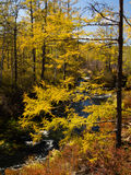 Creek running through the colourful autumn forest Royalty Free Stock Photography