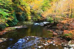 Mountain Stream in the Fall Royalty Free Stock Photo