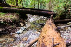 Creek running through the forests of Santa Cruz mountains, Felton, San Francisco bay area, California stock photos