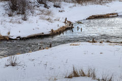 The creek running among the snowy shores. Spring landscape Royalty Free Stock Images