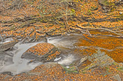 Creek Running Thru the Mountains In Fall Royalty Free Stock Photography