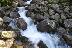 Creek in mountain Royalty Free Stock Image