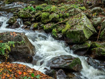 Creek with running water Stock Image