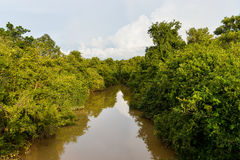Creek. With running water There are trees in the water on both sides royalty free stock images
