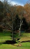 A Creek Runs Through It. Branching stream through farm country royalty free stock photos