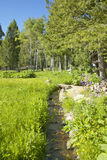 Creek runs through spring foliage at Taft Ranch, Centennial Valley near Lakeview, MT Stock Photo