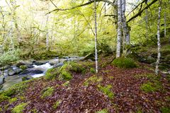 Creek Stock Images
