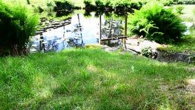 The creek stock video