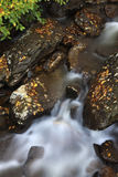 Creek in Smoky Mountains Royalty Free Stock Photos
