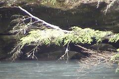 Creek & Snow stock video