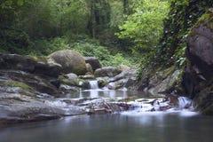 Creek in Sochi. Creek inn in the forest near Sochi stones Stock Photography