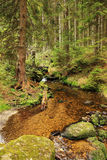 Creek in southern Bohemia Stock Photos