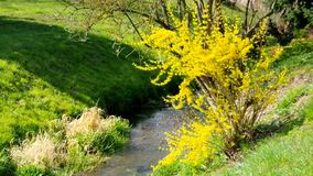 Creek in spring stock footage