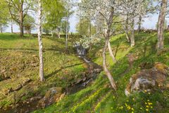 Creek in spring pature Royalty Free Stock Image