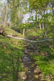 Creek in spring pature Stock Image