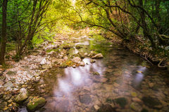 Creek with springwater in the forest Stock Image