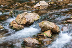 Creek with stone. And algue Stock Photos