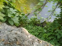 Creek with stones and greenery, beautiful summer nature. The current creek in thickets vector illustration