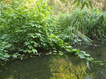 Creek with stones and greenery, beautiful summer nature. The current creek in thickets royalty free illustration