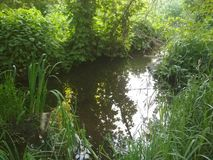 Creek with stones and greenery, beautiful summer nature. The current creek in thickets stock illustration