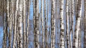 Creek, stream, river - the water patterns, reflection of birch trees on water. Creek, stream, river - the water patterns, reflection of birch trees on the water stock video footage