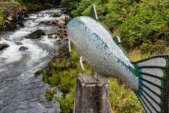 Creek Street Salmon Stock Image