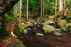 Creek in a Subtropical Rainforest - Australia stock images