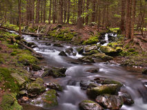 Creek in summer. /Germany/Bavaria/Bavarian forest royalty free stock images