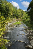 Creek in Summertime Royalty Free Stock Photo
