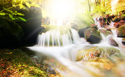 Creek and sun in the forest Royalty Free Stock Photography