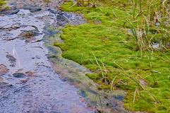 A creek in a swamp Royalty Free Stock Photo