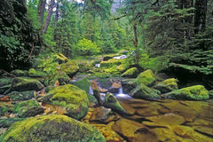 Creek in temperate Rainforest Stock Photos