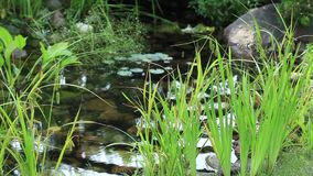 Creek with transparent and clean water Royalty Free Stock Photo