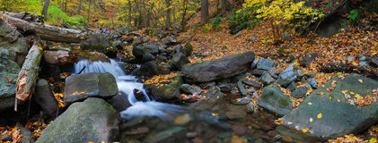 Creek with tree branches Royalty Free Stock Photography